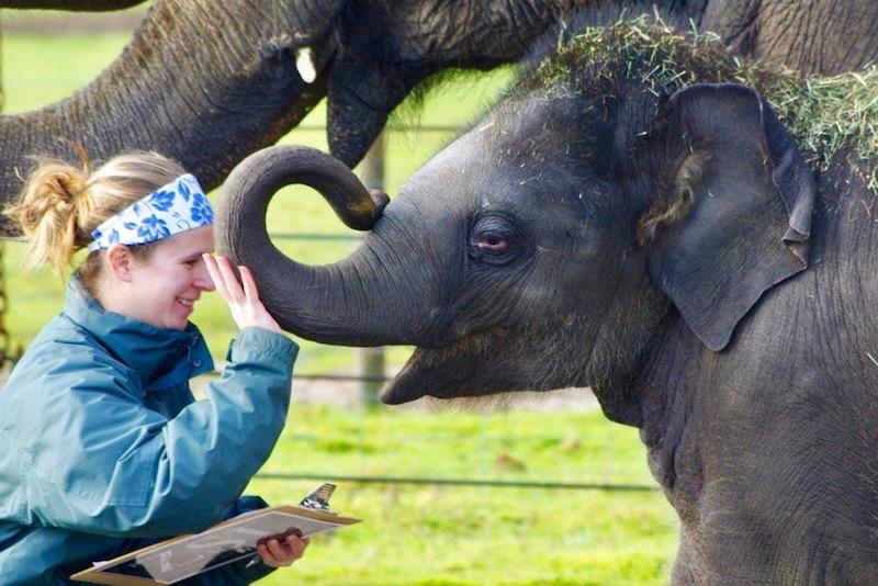 Τα ζώα και εμείς, της Έλλης Βιντιάδη