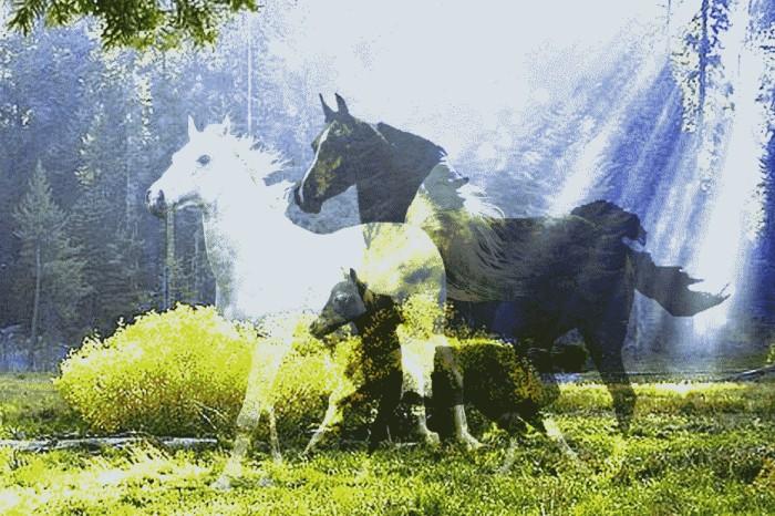Το άλογο και το στχιό