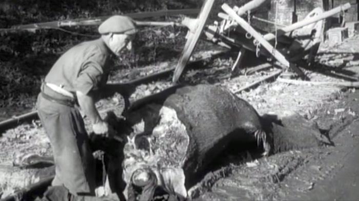 naples 1943