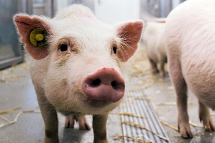 Η ανθρώπινη ηθική και τα άλλα ζώα: μια παλιά συζήτηση που μόλις ξεκίνησε